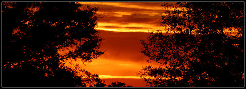 October 20, 2009 - Sunset Peeking through the Trees