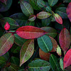 October 22, 2009 - Colored Leaves - This was taken with my blackberry at work today.   This plant had some interesting colored leaves.  Not the best quality because I took it with my blackberry, but thought it was interesting enough to share.
