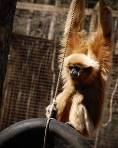 February 12, 2011 - Monkey