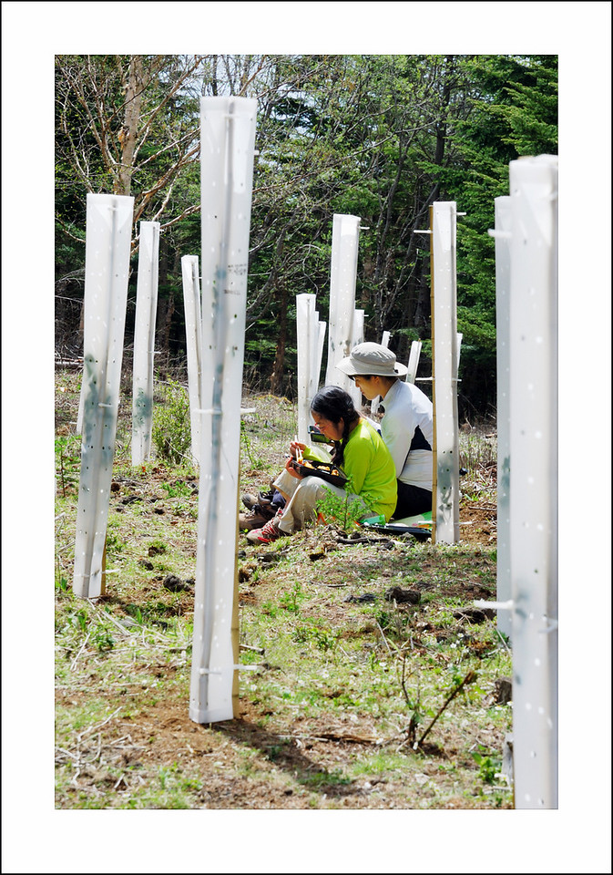 Day 142 May 22. Seishi and I went with a bus load of people from his company to plant trees on Mt. Fuji. After planting the small saplings we staked a deer guard around them to keep the deer from eating the small tender trees. I didn't take many pictures of us working because I was covered with dirt and didn't want to get that all over my camera. This was taken after a bit of wash up - during lunch.