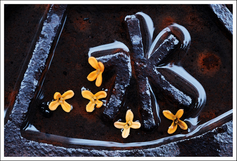"""Day 284 Monday, October 11<br /> After a heavy rain, the kinmokusei are falling. I saw these in a man cover that says """"water"""".<br /> Two telephone calls from my two sons wishing me a happy birthday. What a treat! I got an ipad from my hubby and three kids. I'm thrilled!"""