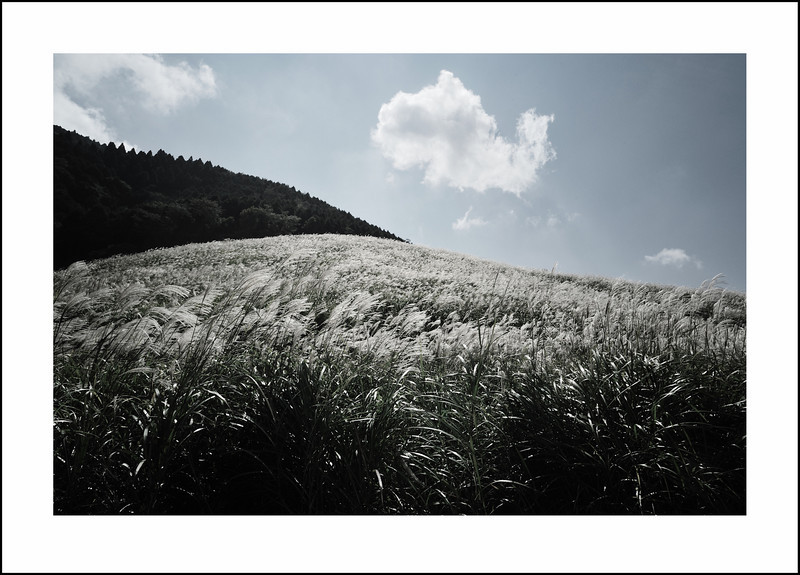 Day 275 Saturday, October 2<br /> We left Friday evening for Hakone, and on Saturday, visited the Pampa grass fields