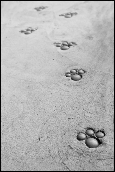 Day 340 Monday, December 6<br /> While walking with Baba, we often pass this new house on the corner of her block. Their front walk has embedded cat prints - so cute!