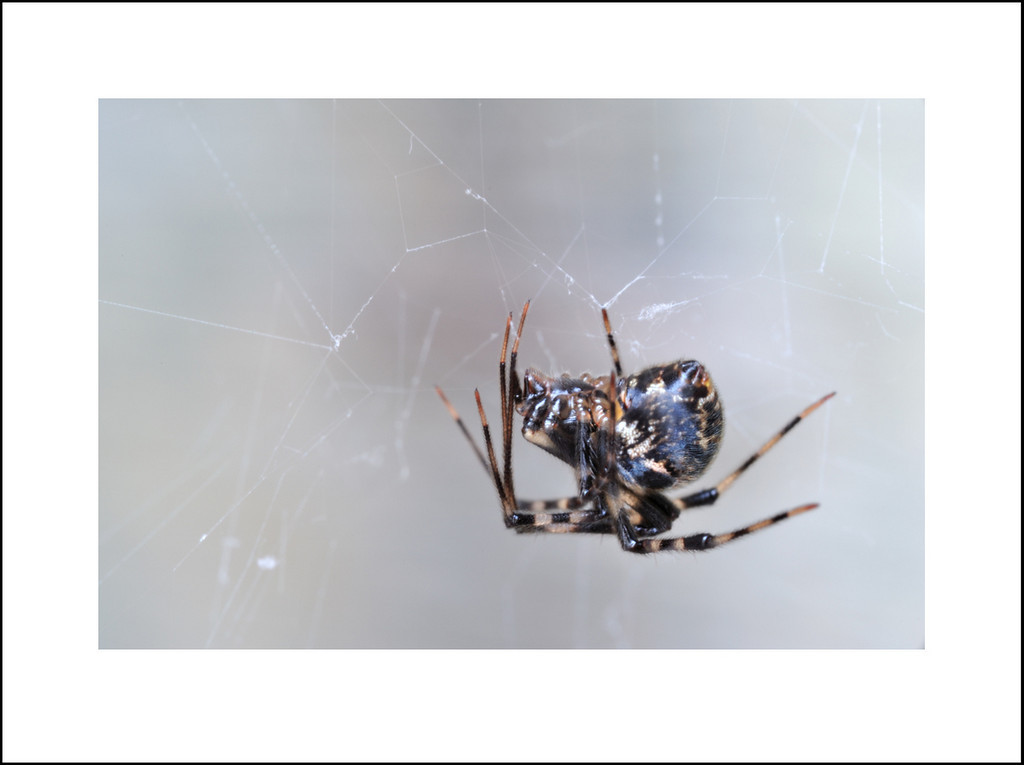 Day 172 June 22<br /> It was very hot and humid today, so I didn't have much motivation to go out with my camera. But I did take my gorilla pod to the garage to take a picture of our resident spider. She or one of her descendants builds a web in the exact same spot every year.