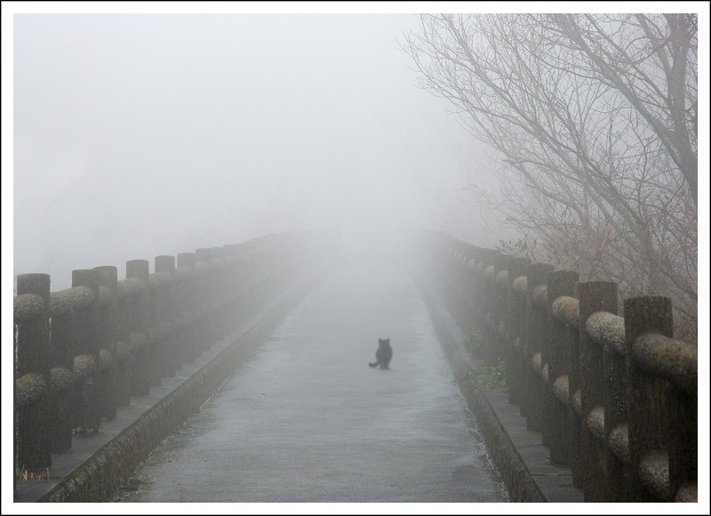 365/65  It was rainy and very foggy in Hakone.  This pathway is the same one I photographed in the snow on February 12.
