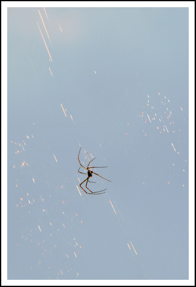 Day 244  Wednesday, September 1<br /> Well it is September now, but still sweltering hot.  35 with 75% humidity.  I didn't venture far, - just a shot of another resident spider.  This one lives at the end of the clothes pole.