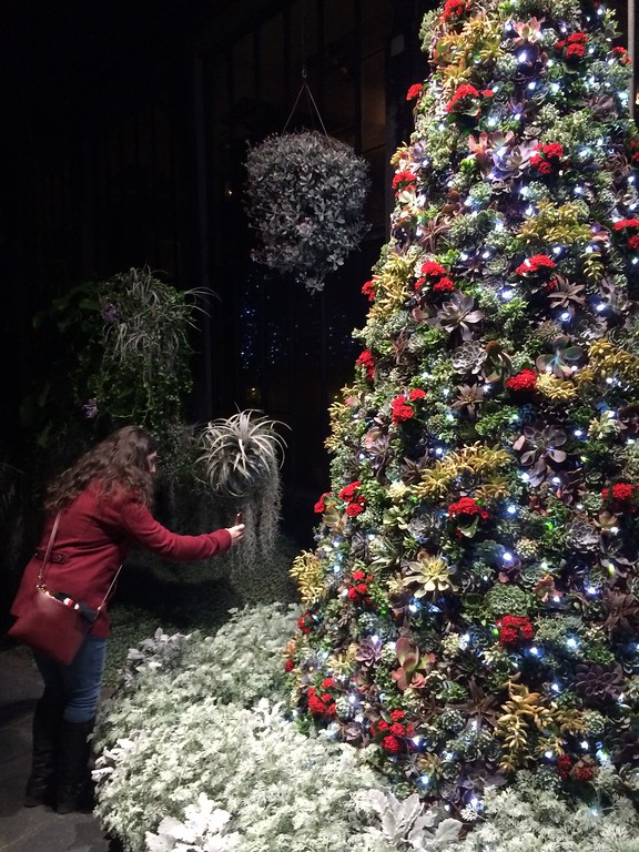 . PETE  BANNAN-DIGITAL FIRST MEDIA     Succulent plants in the Silver garden form a Christmas tree at Longwood Gardens.