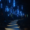 "PETE  BANNAN-DIGITAL FIRST MEDIA    <br /> ""When I see those I think of the color of the Carribean,"" said a woman at seeing these lights at Longwood Gardens"