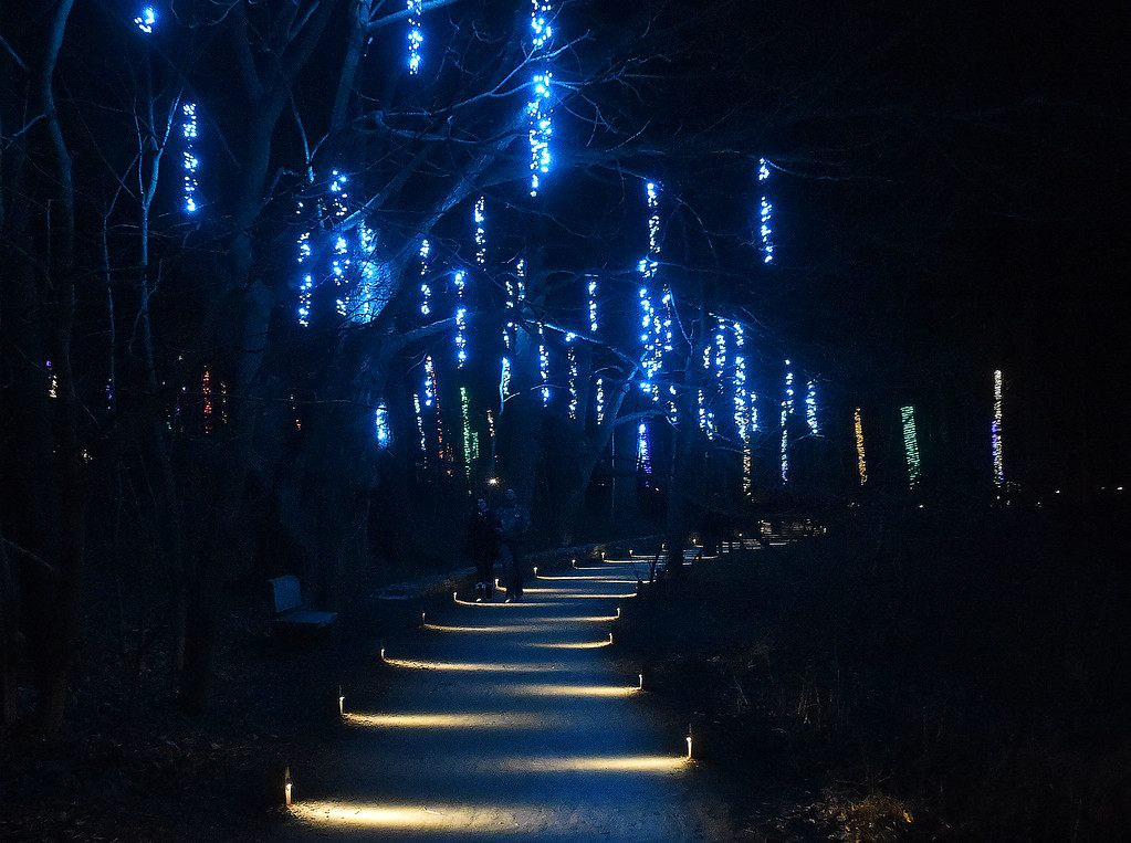 """. PETE  BANNAN-DIGITAL FIRST MEDIA     \""""When I see those I think of the color of the Carribean,\"""" said a woman at seeing these lights at Longwood Gardens"""