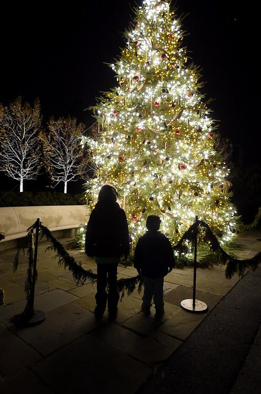 . PETE  BANNAN-DIGITAL FIRST MEDIA     Children look at the Gardner\'s Tree at Longwood Gardens.