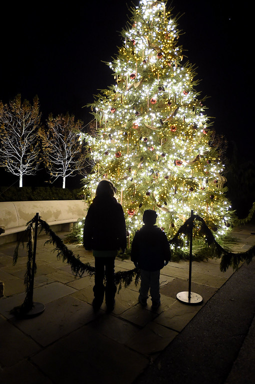 . PETE  BANNAN-DIGITAL FIRST MEDIA     Children look at the Gardner\'s Tree at Longwood Gardens.