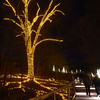 PETE  BANNAN-DIGITAL FIRST MEDIA    <br /> A tree and its root pattern are illuminated  along the Meadow Board Walk at Longwood Gardens.