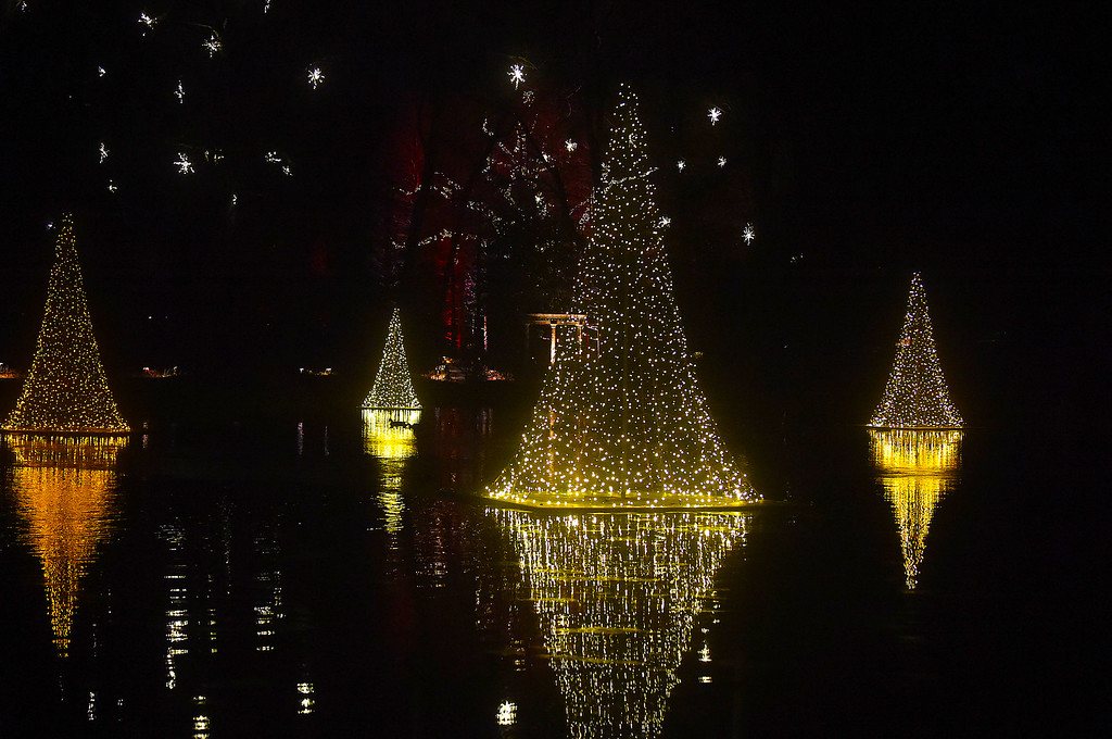 . PETE  BANNAN-DIGITAL FIRST MEDIA     Floating Tree lights at Longwood Gardens.
