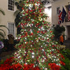PETE  BANNAN-DIGITAL FIRST MEDIA    <br /> The tree at the Peirce-duPont House at Longwood Gardens