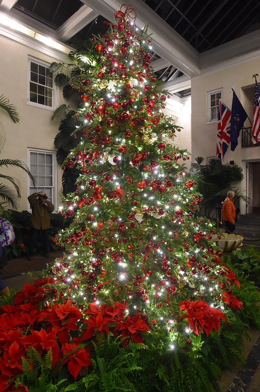 . PETE  BANNAN-DIGITAL FIRST MEDIA     The tree at the Peirce-duPont House at Longwood Gardens