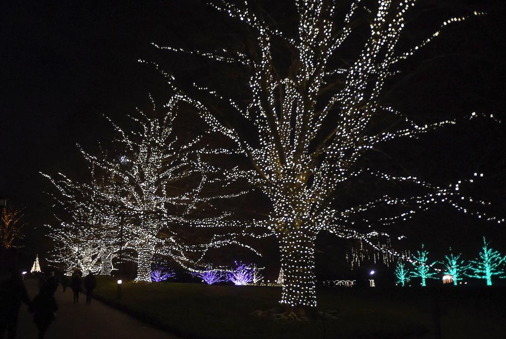 . PETE  BANNAN-DIGITAL FIRST MEDIA     Lighted trees along the walks at Longwood Gardens.