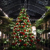 PETE  BANNAN-DIGITAL FIRST MEDIA    <br /> The Grand Tree in the Conservatory at Longwood Gardens.