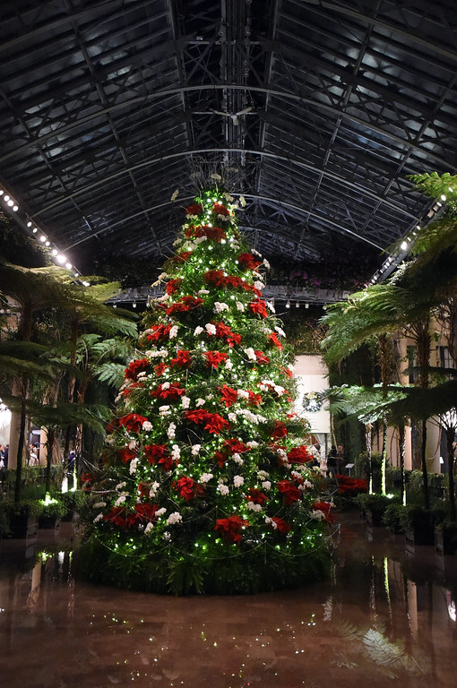 . PETE  BANNAN-DIGITAL FIRST MEDIA     The Grand Tree in the Conservatory at Longwood Gardens.