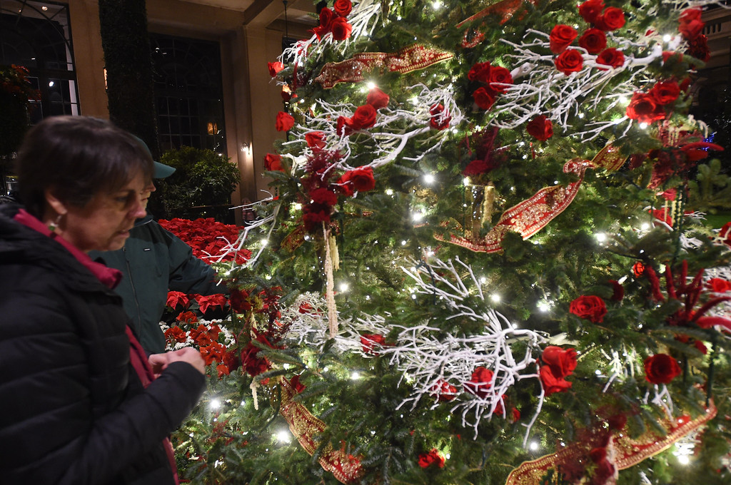 . PETE  BANNAN-DIGITAL FIRST MEDIA     Inspecting the Christmas tree in the Conservatory at Longwood Gardens.