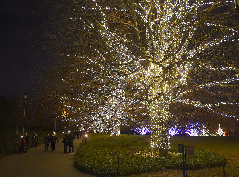 PETE  BANNAN-DIGITAL FIRST MEDIA    <br /> Light covered trees at Longwood Gardens.