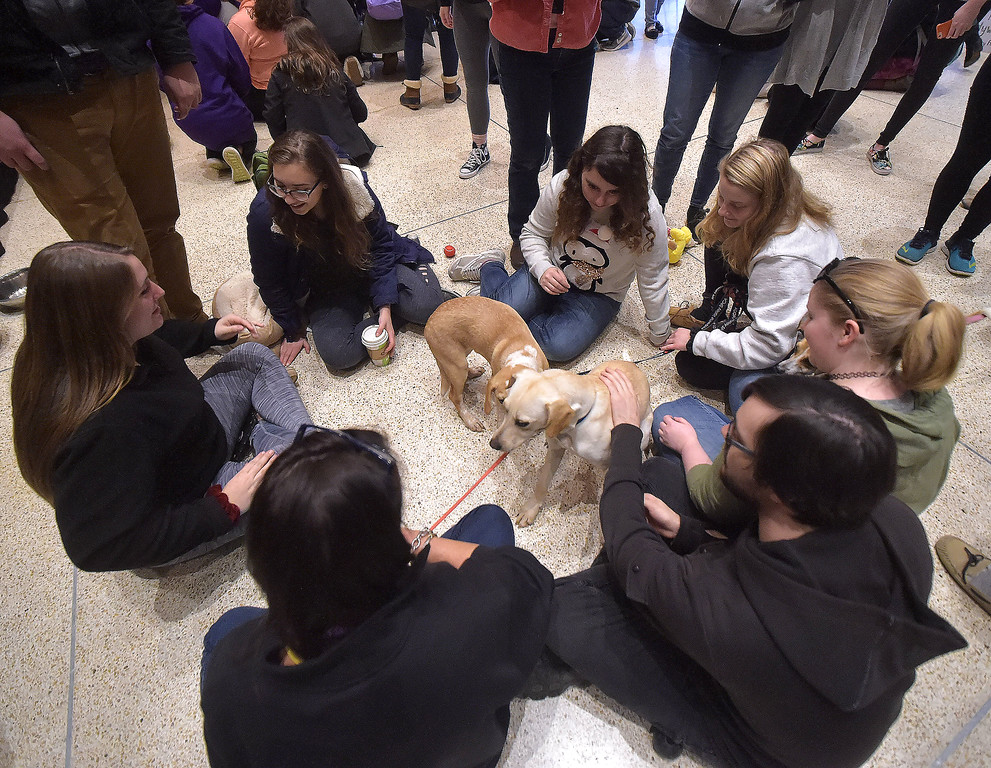 . PETE BANNAN -DIGITAL FIRST MEDIA     West Chester University students pet puppies brought to campus by the Brandywine Valley SPCA Thursday. Students paid $3 to pet the puppies with all proceeds  going to help the Barclay Friends Home residents.