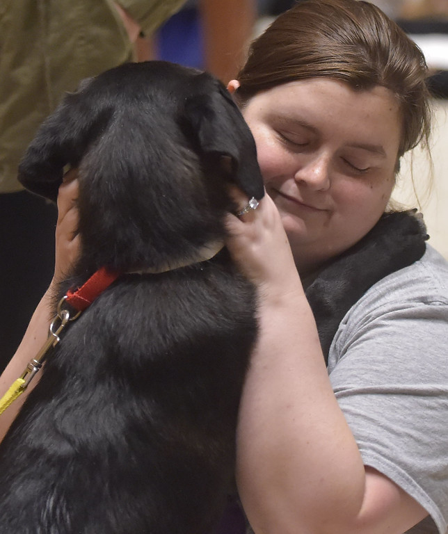 """. PETE BANNAN -DIGITAL FIRST MEDIA   West Chester University student Kelsey Pontz of Lancaster County holds, Sydney, one of the puppies up for adoption at Brandywine Valley SPCA.  \""""He is a sweetie,\"""" she said."""