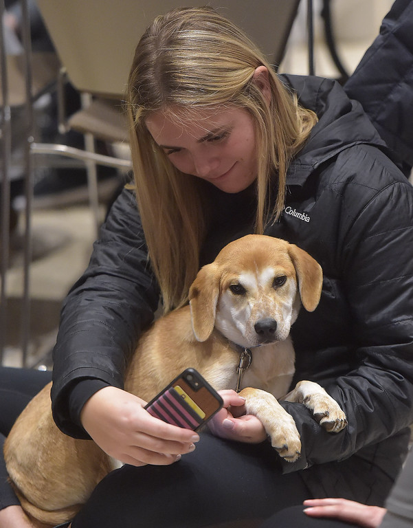 . PETE BANNAN -DIGITAL FIRST MEDIA    West Chester University junior, Carly Shaup  takes a selfie with Shay one of 14 puppies up for adoption at Brandywine Valley SPCA that visited West Chester University Thursday.
