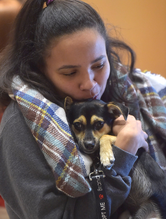 ". PETE BANNAN -DIGITAL FIRST MEDIA   Chaeli McCay, a West Chester University sophomore from Chadds Ford hugs  Dumbo,one of the puppies up for adoption at Brandywine Valley SPCA. ""I love him, I\'m about to call my mom and ask if we can adopt him,\"" McCay said. \""I have a cat, but I want to get a dog!\"""