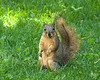 """June 23, 2013:  """"Yes, of course I'm loving all these nuts!"""""""