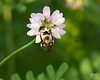 June 22, 2014:  Busy bumble