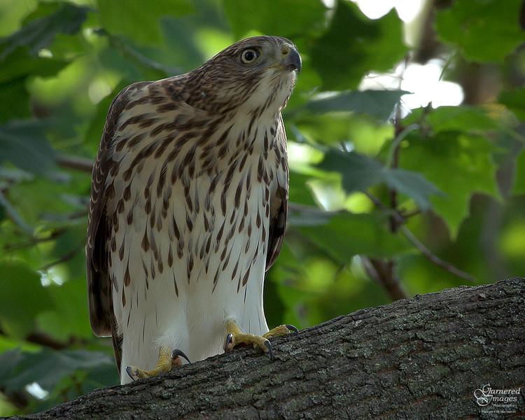 August 15, 2008: Wary watchfulness