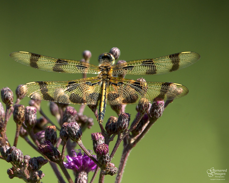 August 3, 2008:  Dragonfly