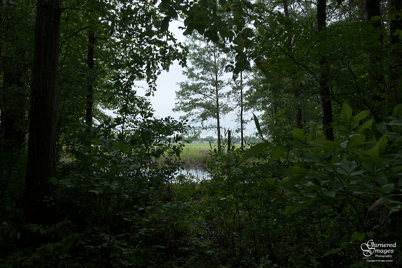 September 9, 2018:  The end of the woods in our section of the township.