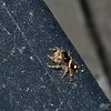 September 5, 2018:  The tiny jumping spiders were the only thing moving around on this hot, hot day.