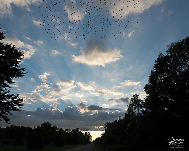 September 15, 2018:  A murmuration of starlings went winging overhead.