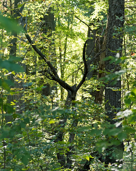 October 10, 2019:  Fantastic shapes in the back woods.