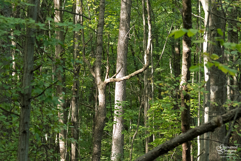 October 6, 2019:  Another interesting shape spotlighted in the woods.