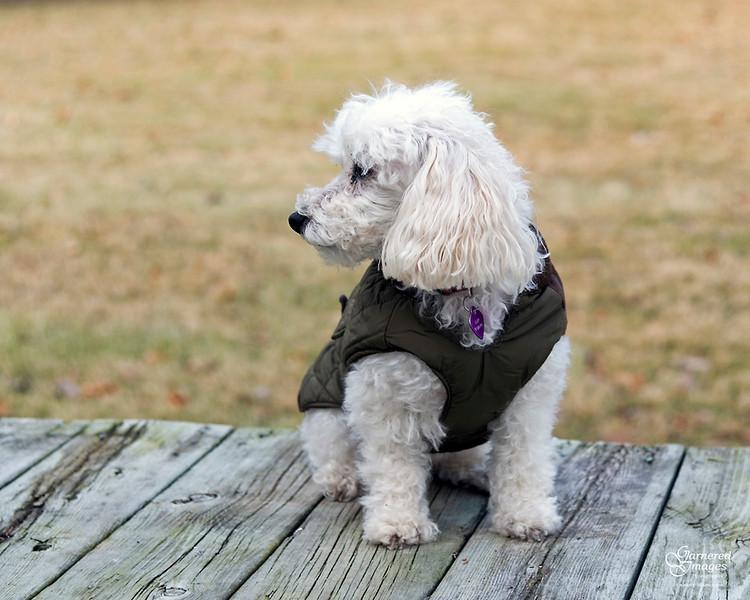 December 26, 2019:  Alby models his new Eddie Bauer coat.