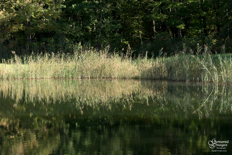 October 0, 2019:  The pond was pretty as the afternoon waned.