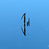 August 20, 2021:  Pond abstract.