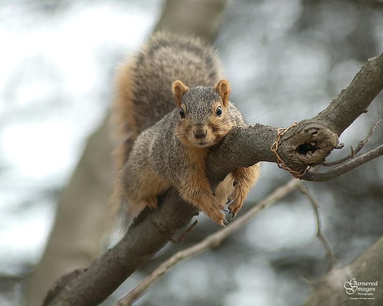 March 18, 2012:  Just hangin' around.