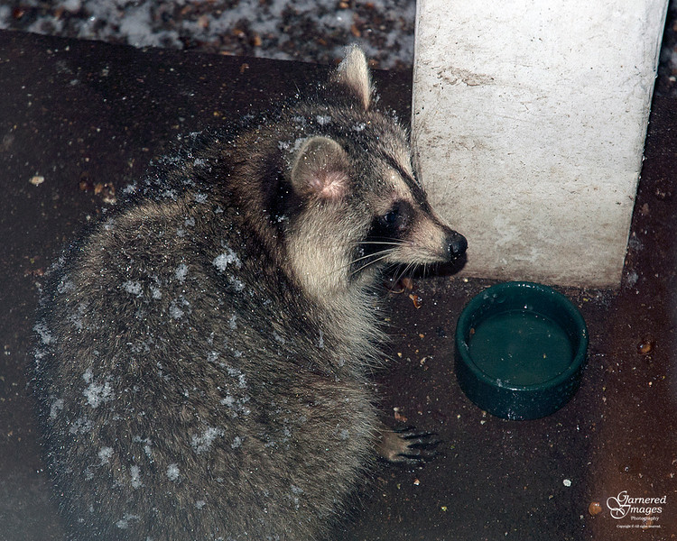 February 24, 2012:  One of the night visitors.