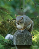 """August 28, 2010:  """"Small Ear"""" waits for an opportunity to raider the squirrel feeder."""