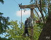 September 20, 2012:  Installation of a new utility pole.