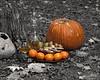 October 20, 2012:  Still life - Fall afternoon break