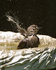 June 14, 2008:  Splish-splash!