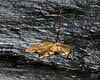 October 28, 2008:  Gold leaf on slate.