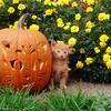 Kitten and Pumpkin Photograph