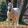 White Horse in Autumn Photo