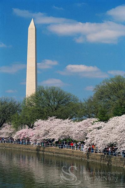 Washington DC Monument Photo